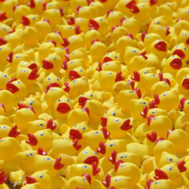 rubber-ducks1