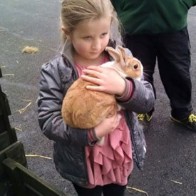 Kiltimagh Pet Farm